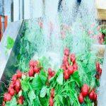 قیمت دستگاه شستشوی سبزی